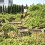 Steinlager der Stadt Koblenz, zugewachsene Einzelteile [Quelle: Verein der Freunde und Förderer Barbara-Denkmal e.V. Koblenz]